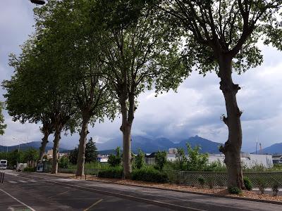 Chambéry : aux arbres, citoyens !